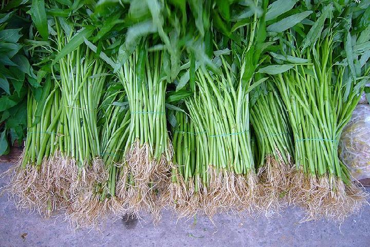 Cara mengobati ambeien dengan akar kangkung