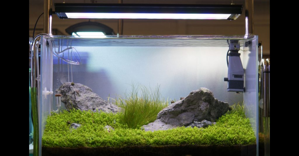 Daftar tanaman untuk aquascape yang bisa hidup di air.